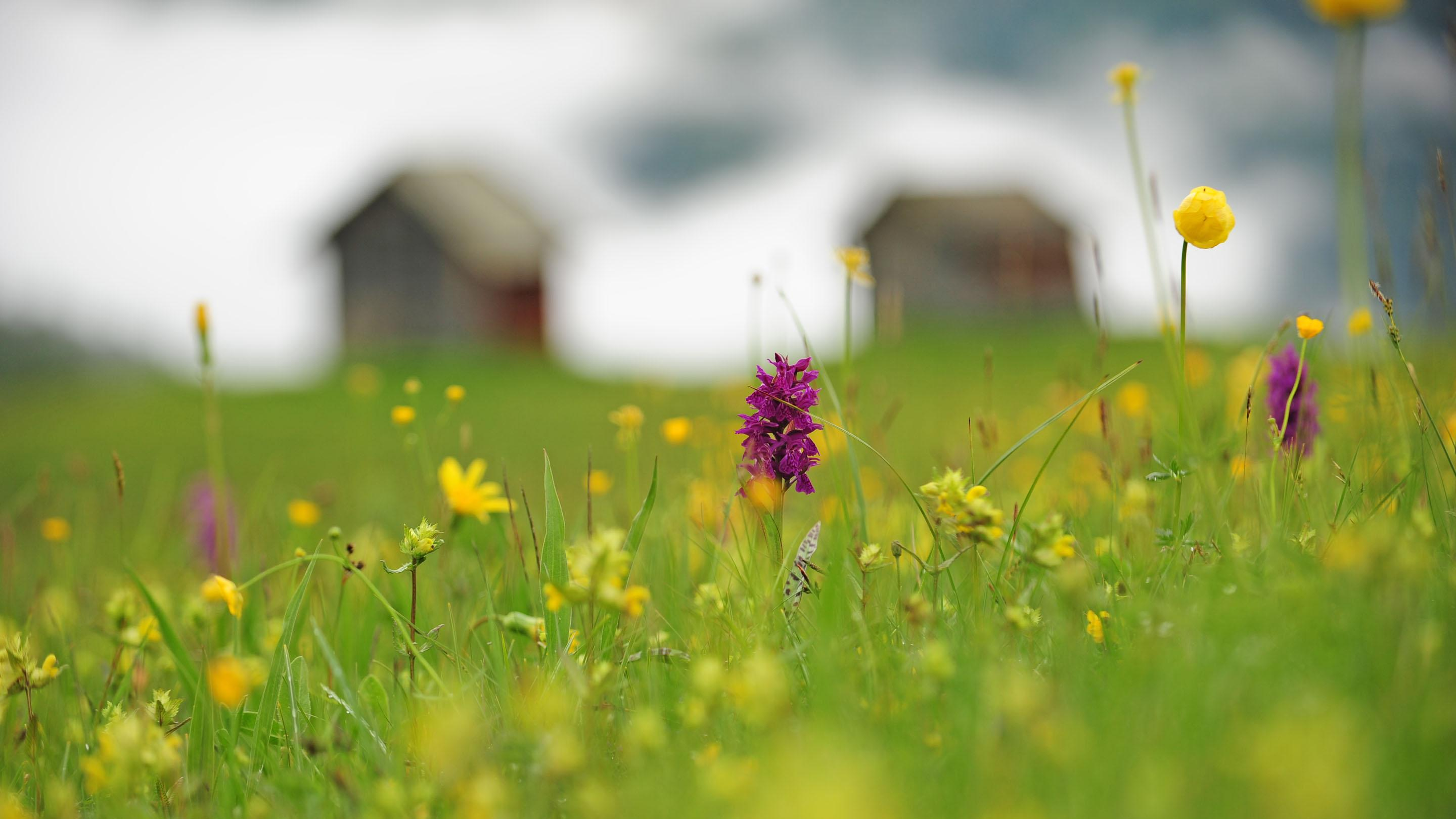 Alpine flowers of the Dolomites at Vitalpina Wanderhotel Europa